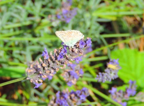 1butterfly