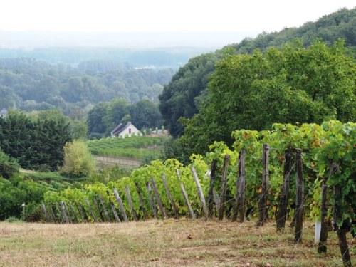 Saumur Wine Country