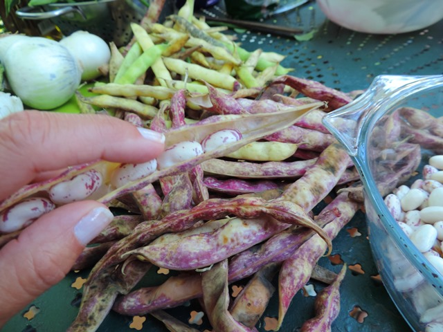 Red and white beans, found in Provence